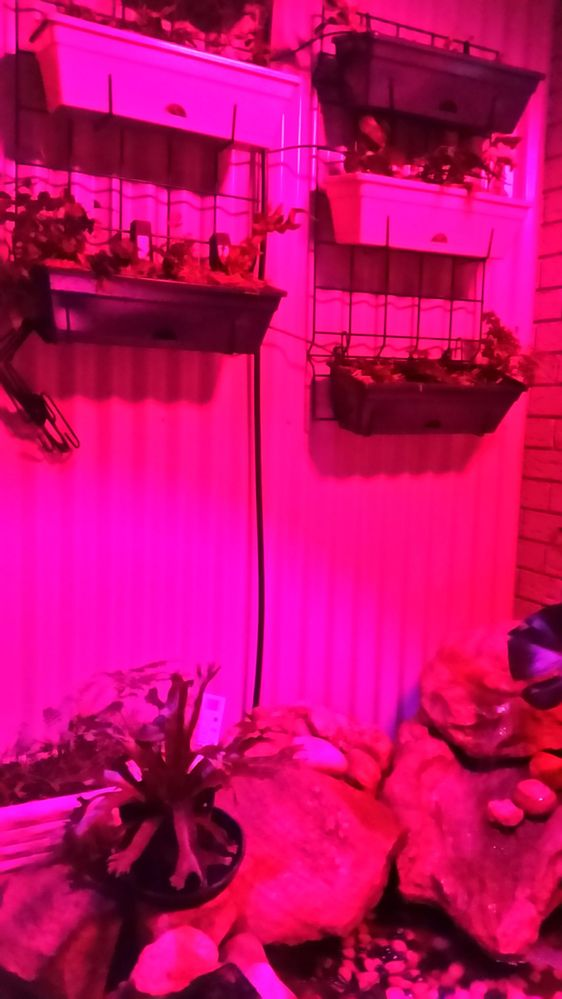 Grow light pic