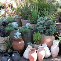 1.2 Pots & plants.jpg