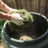 3. Lawn clippings can be used to start your compost.jpg