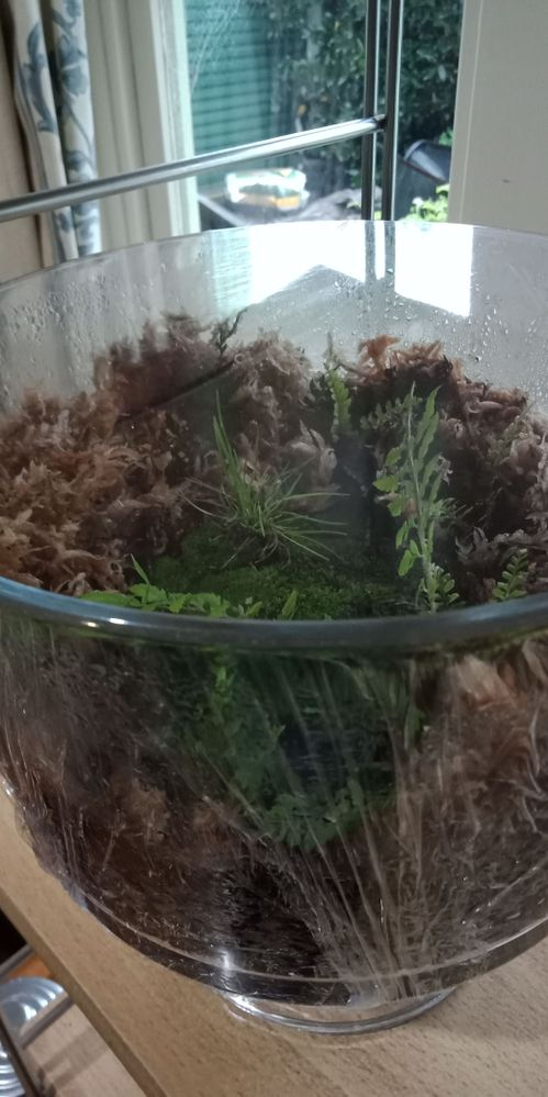 Mini-moss and fern garden in dessert bowl