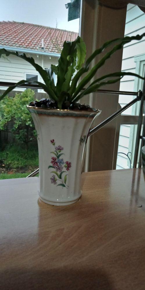 Mum's best Spode china & plant