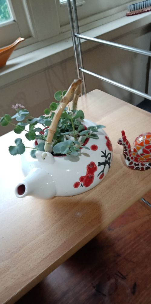 Chinese teapot with succulents