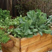 1. Grow in pots or raised beds.jpg