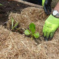 3. Plant seedlings.jpg