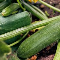 4. Healthy plants are better able to resist pests.jpg