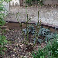 5. Look critically at the bush as a whole.JPG