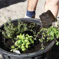 3.1 Sow seeds or plant seedlings.jpg