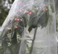 4.1 Netting can help prevent pest damage.jpg
