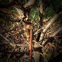 3.2 Damaged tree.jpg