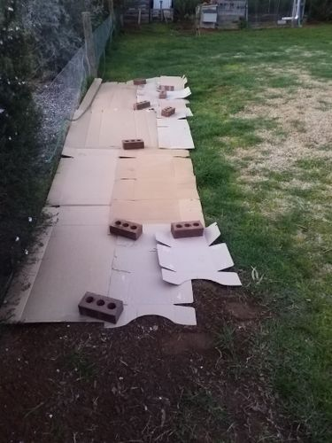 Removed all tape and plastic from the cardboard. Set it out to shape, with overlaps to stop grass and weeds coming through. Hosed it down and soaked it.