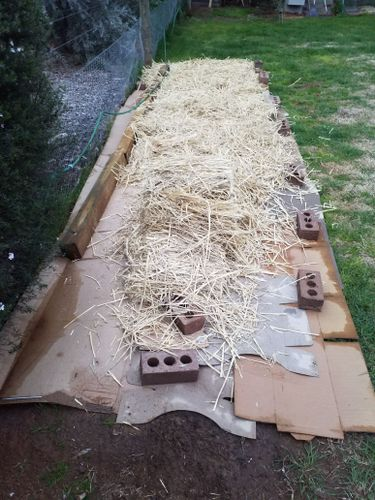 Next was a layer of straw. This is mid way and then that got a hose down as well.