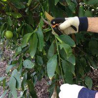 3.1 Pruning.jpg