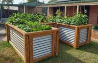 Pancho's vegie garden