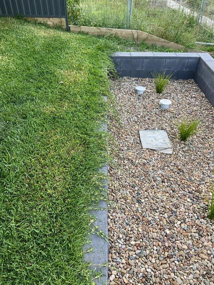 Grass on rain water garden.jpeg
