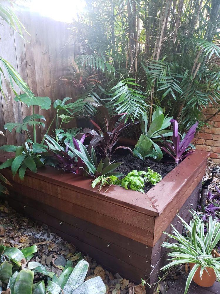 gardenbed1.jpg