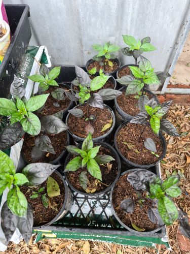 Some more seedlings