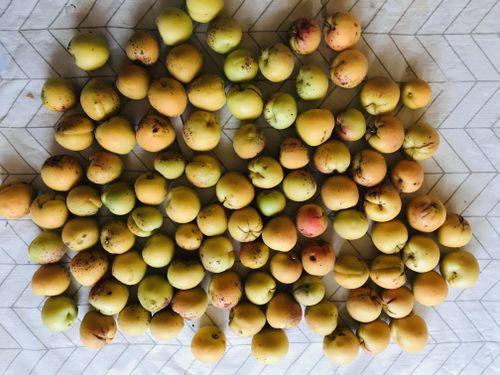 101 Apricots