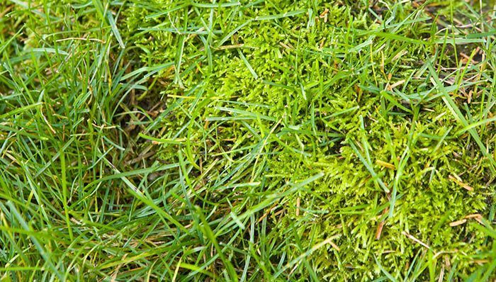 ht_how-to-get-rid-of-moss-in-lawns-hero.jpg