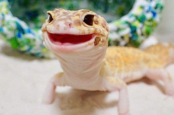 leopard-gecko-smile1