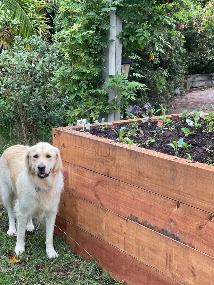 raised garden beds.jpeg