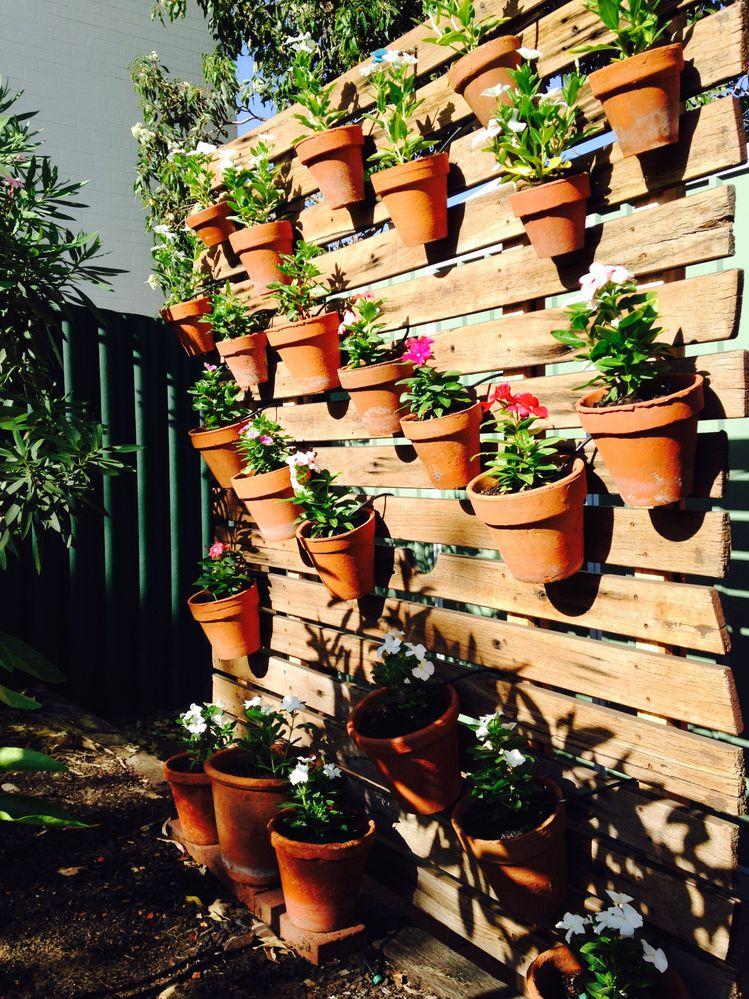 pot garden.jpeg