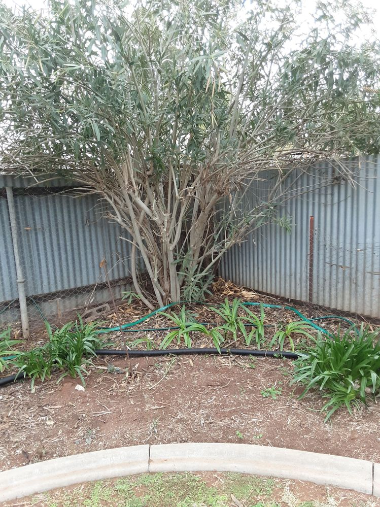 Seat to go in front of the Oleander