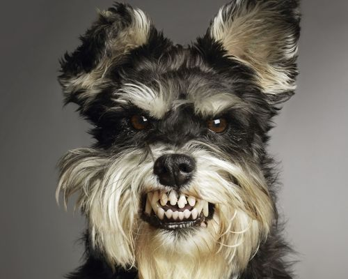 scary-dog1.jpg