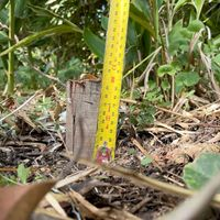 3.1 Set your first stake height.jpg