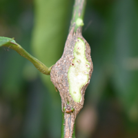 Exposed gall
