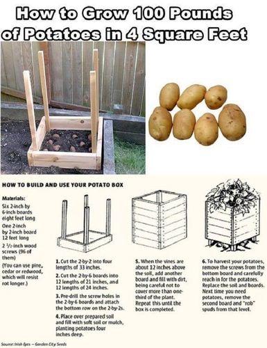 Small-Garden-potato.jpg