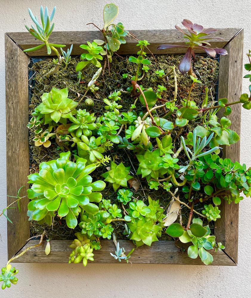 succulent frame 1.png