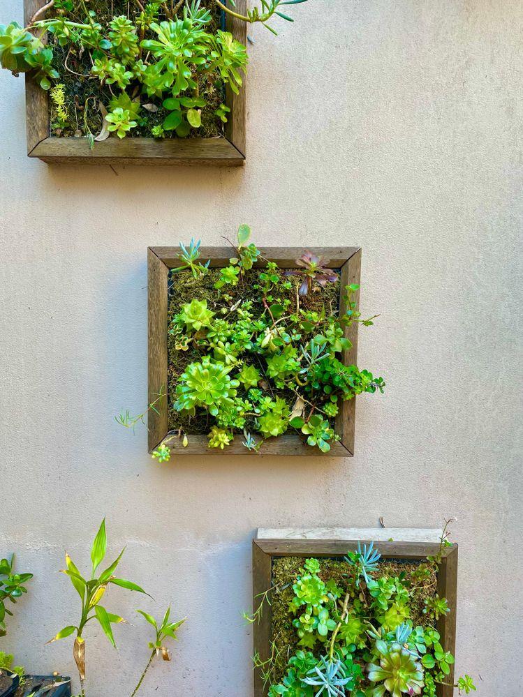 succulent frames.jpeg
