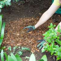Mulch is a key part of watering well.
