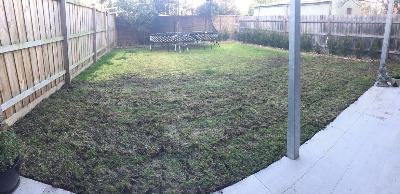 lawn-7.jpg