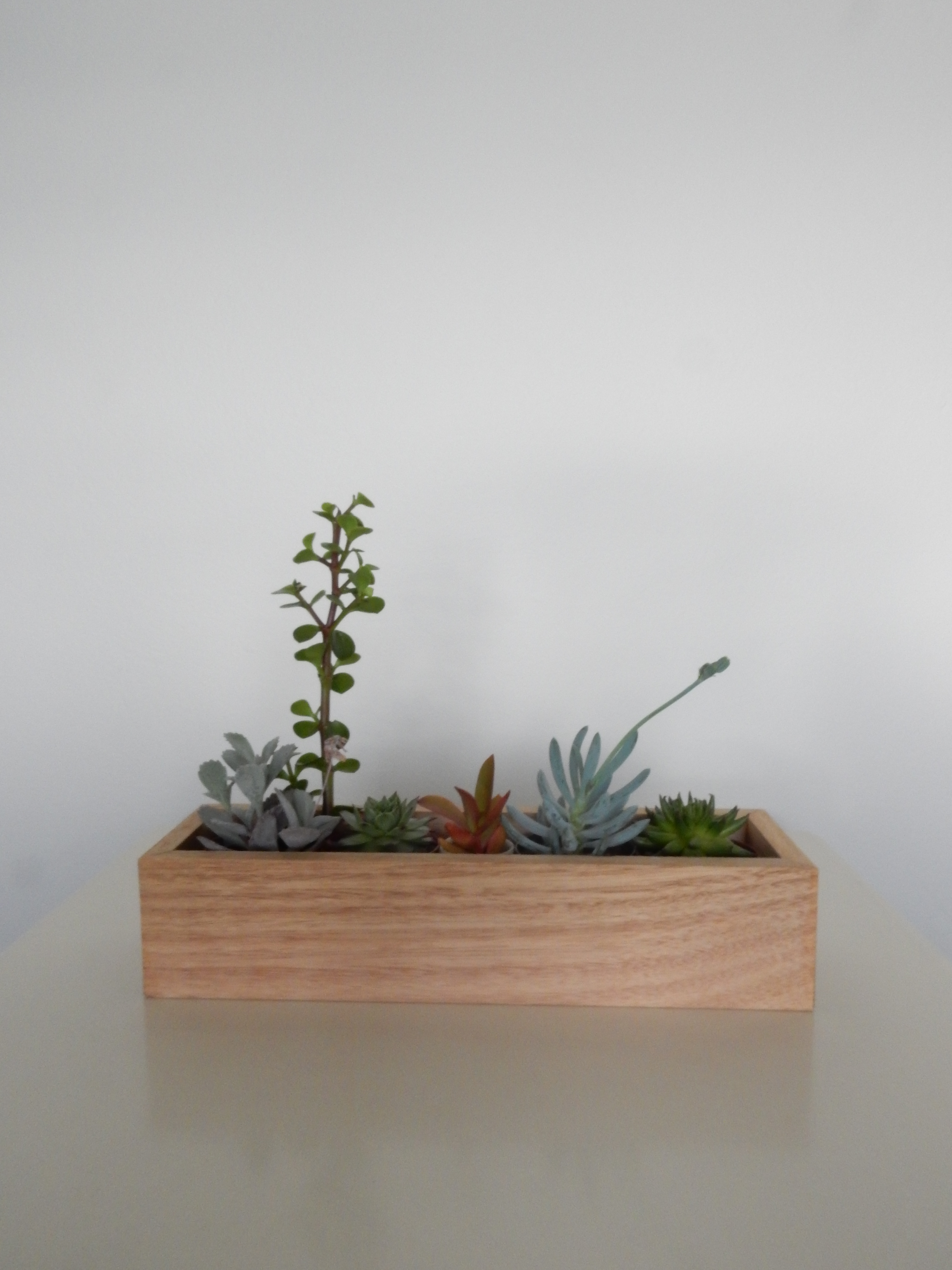 Wooden Succulent Planter 2