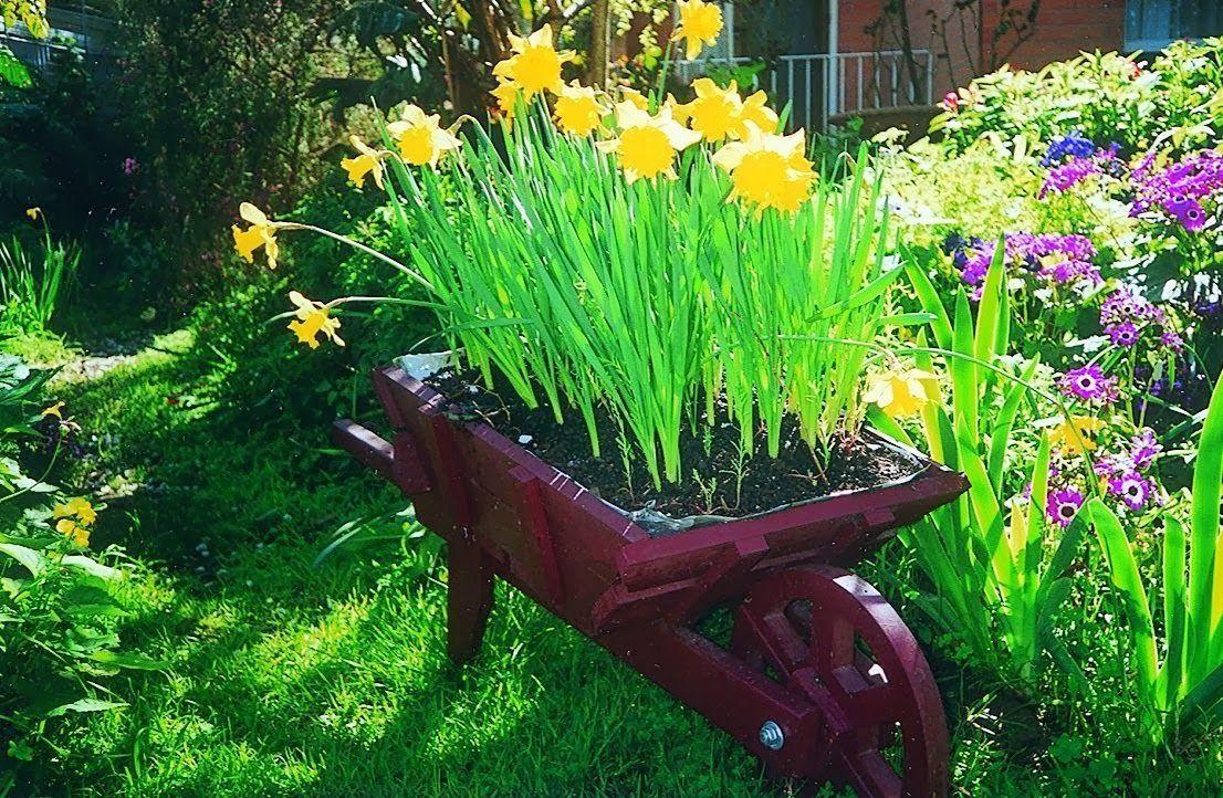 soon daff planting time