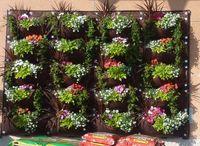 vertica-garden-4.jpg