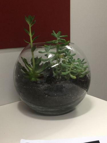 Succulent-Terrarium-1.JPG