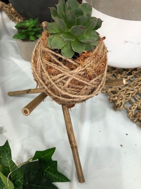 Kokedama ball on bamboo stand