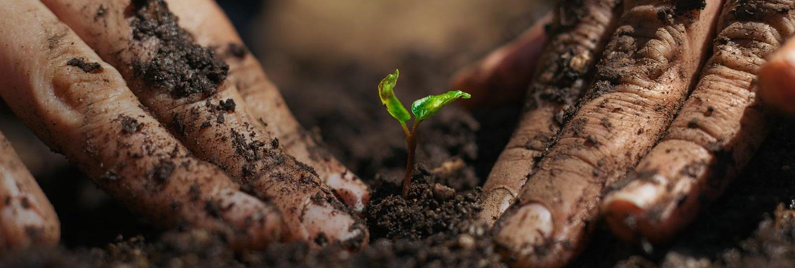 PlantingBaby.jpg