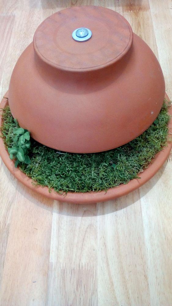 5 Water + Add Mini Plants.jpg
