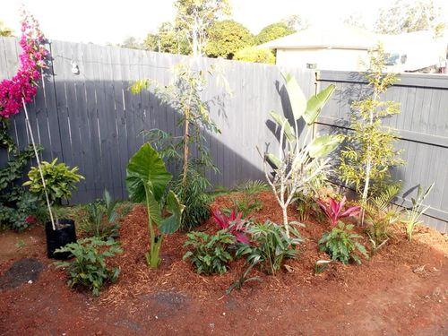 Garden in corner between 2 decks: palms, waterhouseas, red cordylines, elephant ears, giant bird of paradise, frangapani