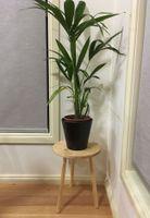 Plant stool