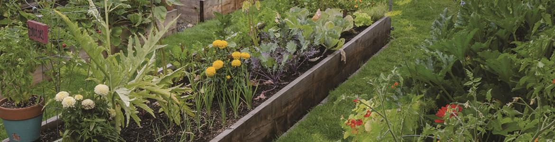 herb-garden-1772x.png