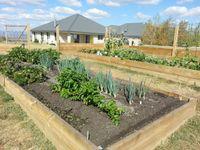 Raised vegie garden