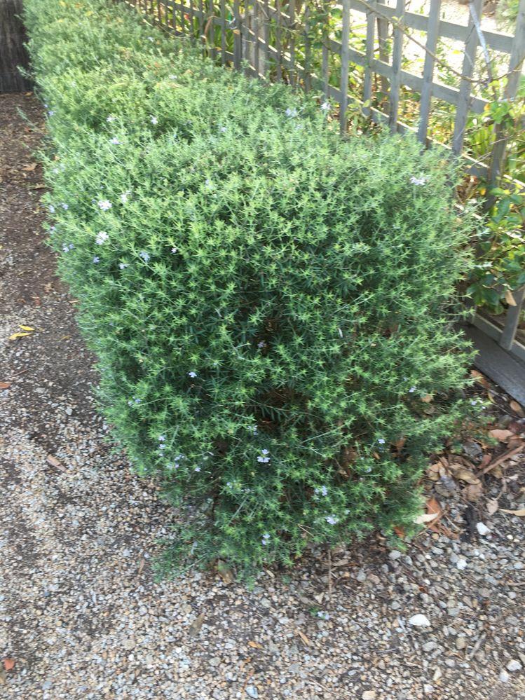 mystery plant.JPG