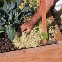 10.1 Plant your new garden bed.jpg