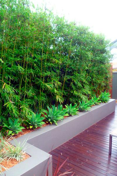 6courtyard-planting.jpg
