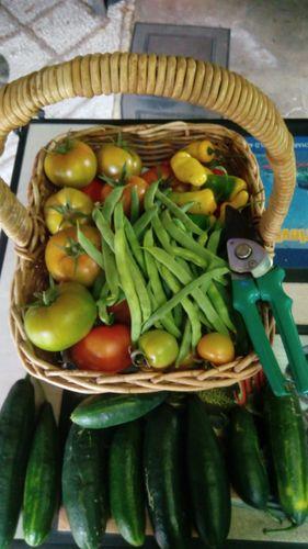 last Tuesday's harvest