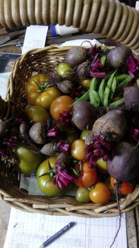 Saturday's harvest